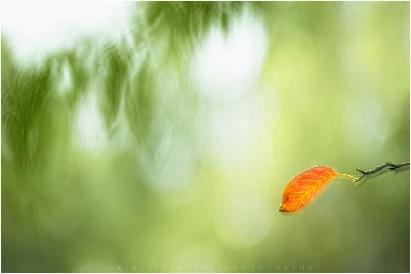 sanfter Wind, ein Blatt......Oktober