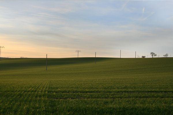 sanftes grün im winter