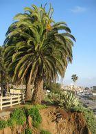 Santa Monica II