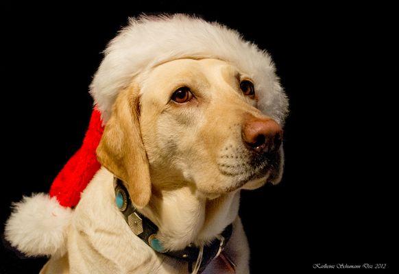 """""""Santa Pfote"""""""