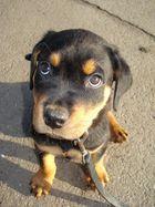 Sanyo(nicht der Fernseher)ein Hund!