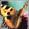 Saphiria Picaller