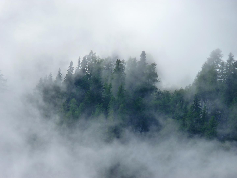 Sapins suisse dans l'orage
