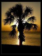 Sarasota-Sunset
