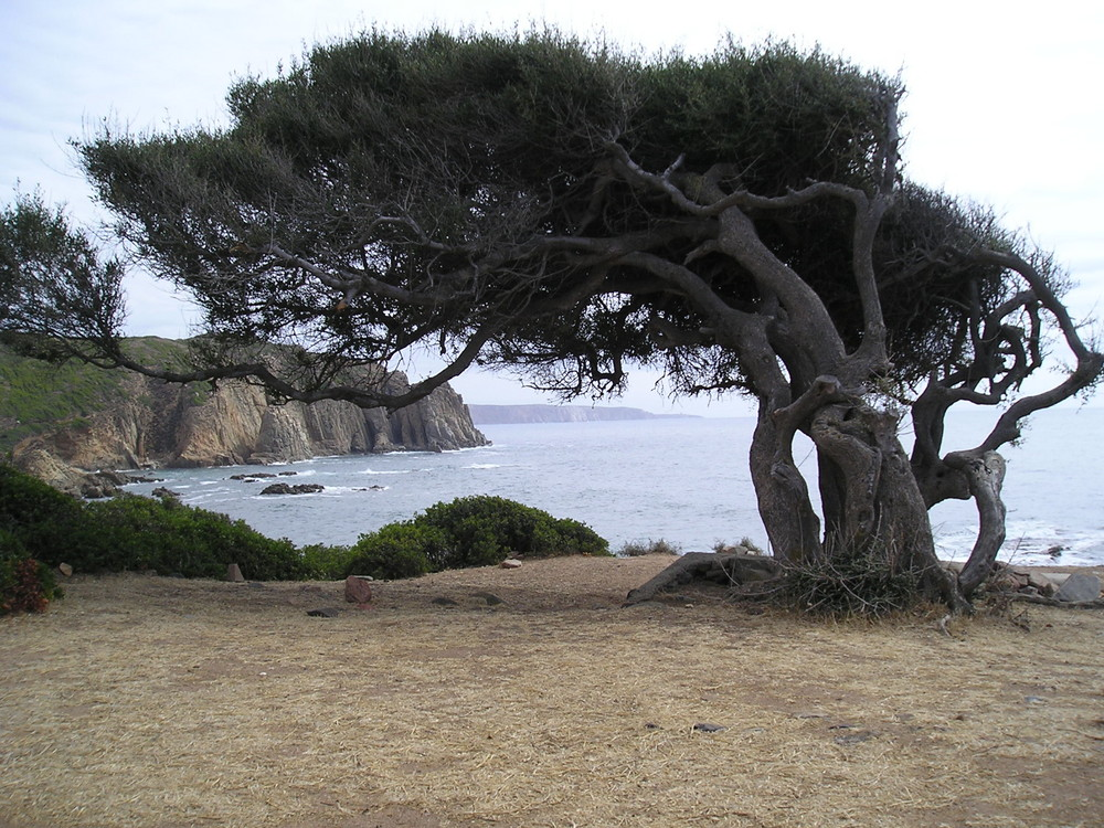 Sardegna Capo Pecora