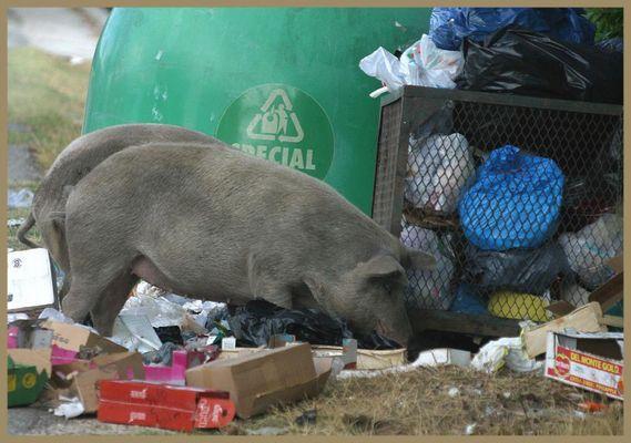 Sardischer Mülldienst in den Bergen
