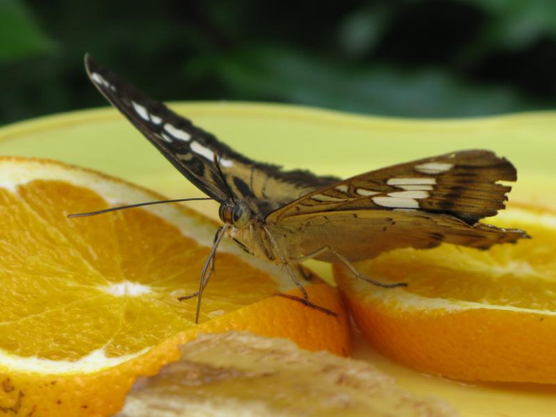 Sassnitz - Schmetterlingsmuseum 2
