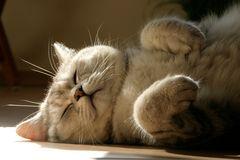 satt, müde und zufrieden