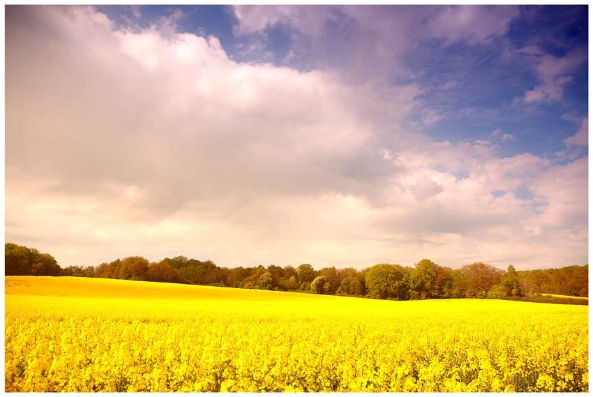 sattes Gelb