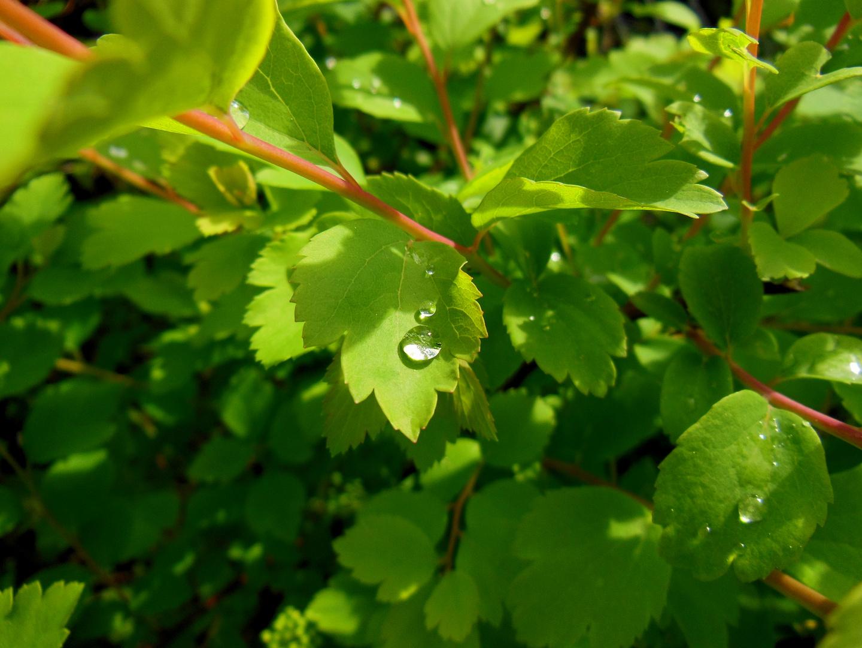 sattes grün und ein paar Regentropfen