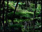 sauerländer urwald