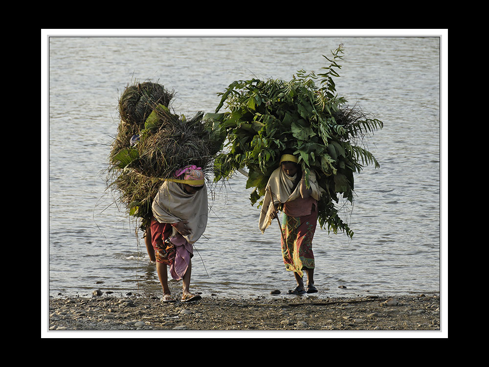 Sauraha-Chitwan 33