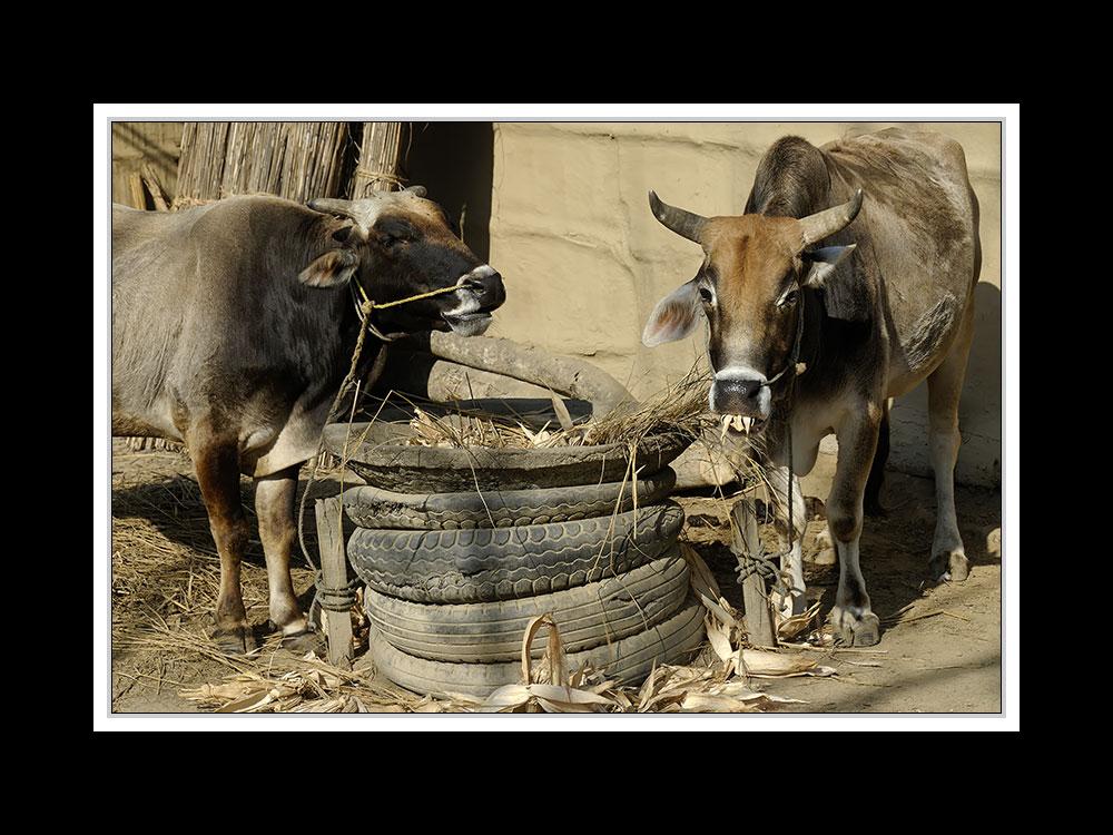 Sauraha-Chitwan 35