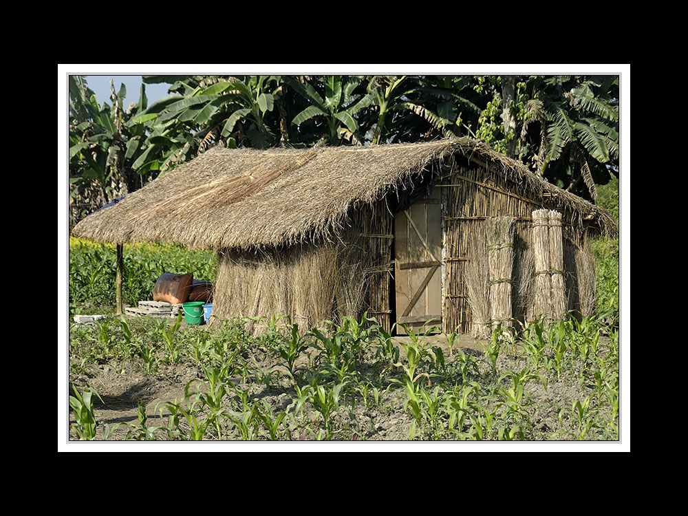 Sauraha-Chitwan 44