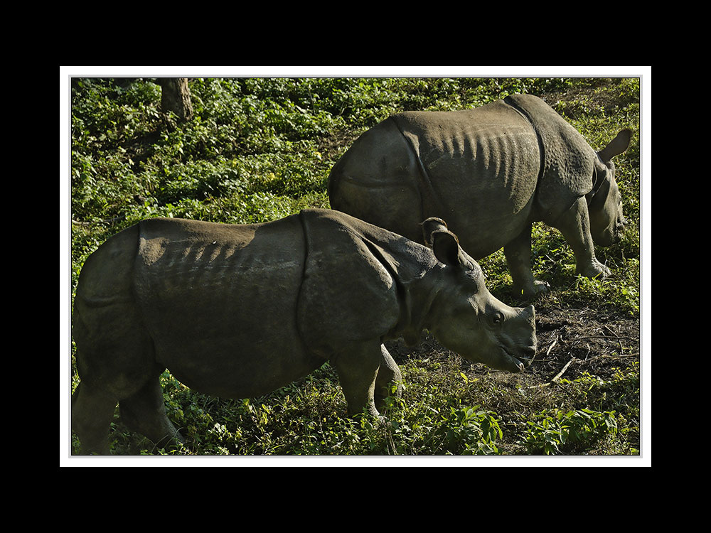 Sauraha-Chitwan 57