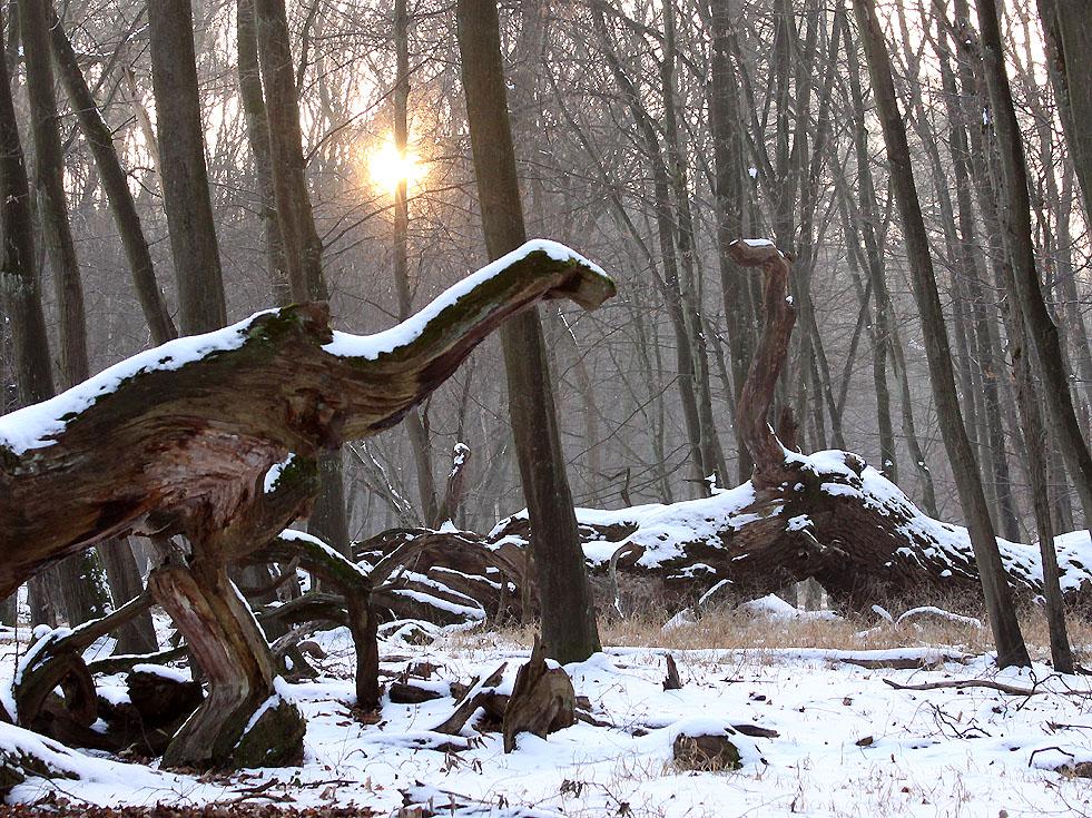 Saurier im Winter