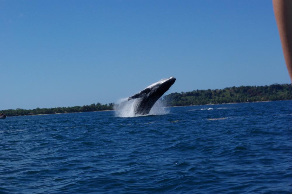 Saut de baleine 1