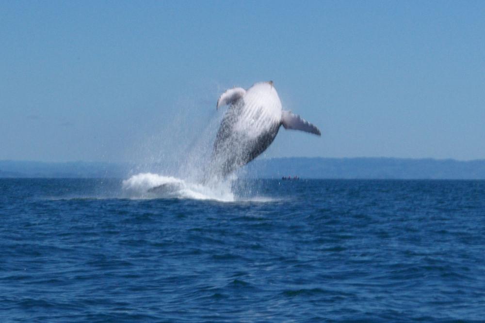 Saut de baleine 2