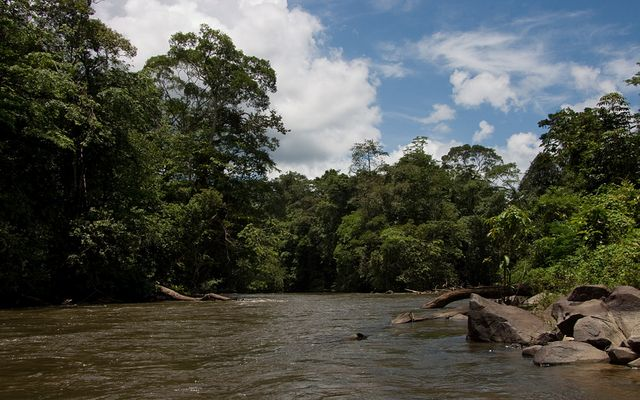 Saut Pararé ( Arataï ), Franz. Guyana