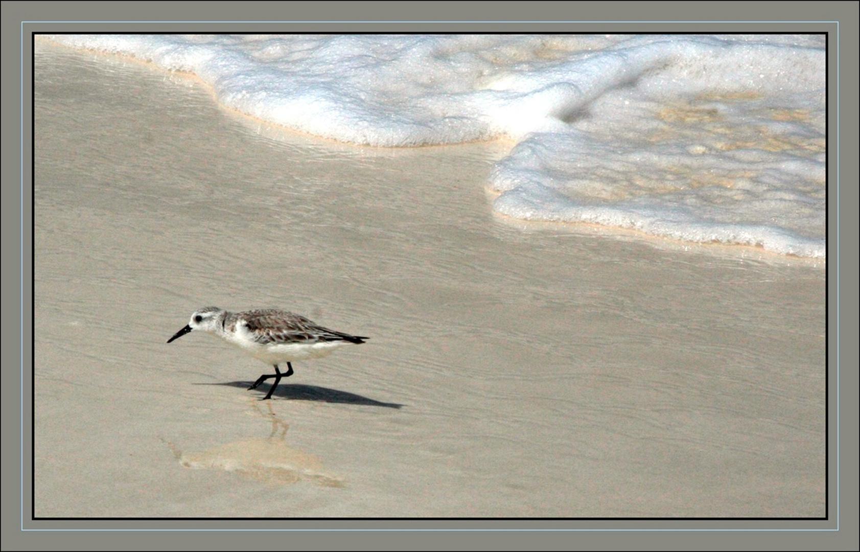 sautillant sur la plage