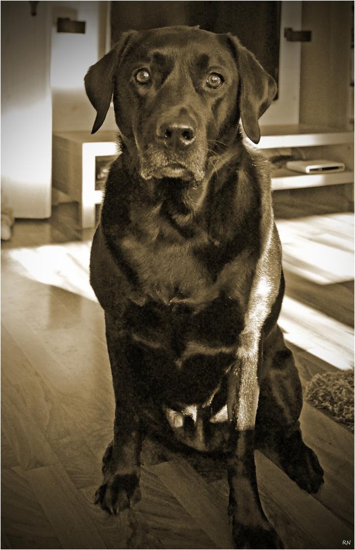 Savage Dog ;)