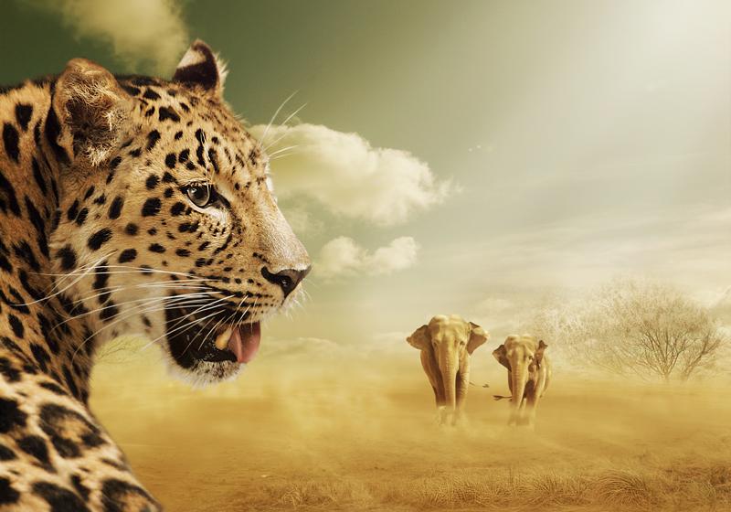 *savannen.abend*