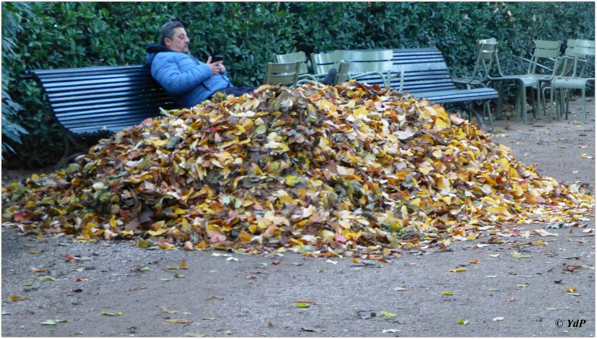 Savoir apprécier l'odeur humide des  feuilles mortes...