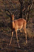Savute, Chobe National Park, Botswana 2