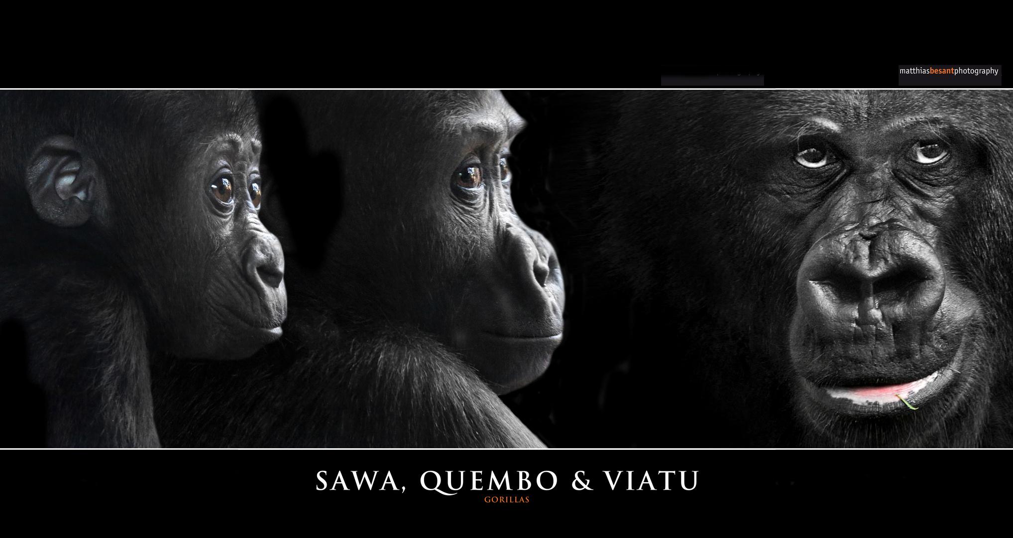 SAWA, QUEMBO & VIATU