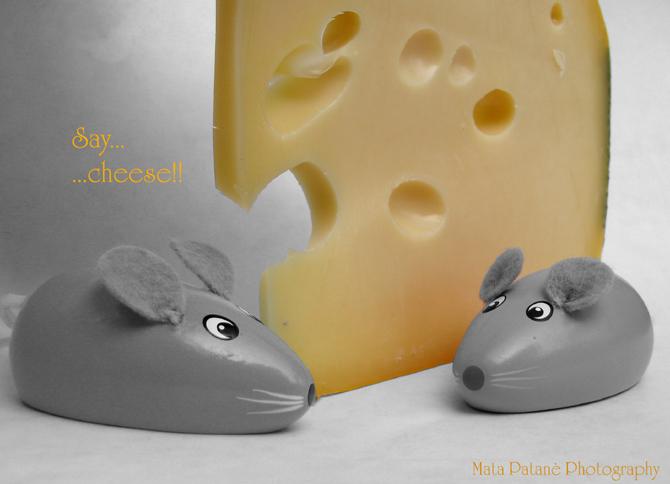 Say...cheese!