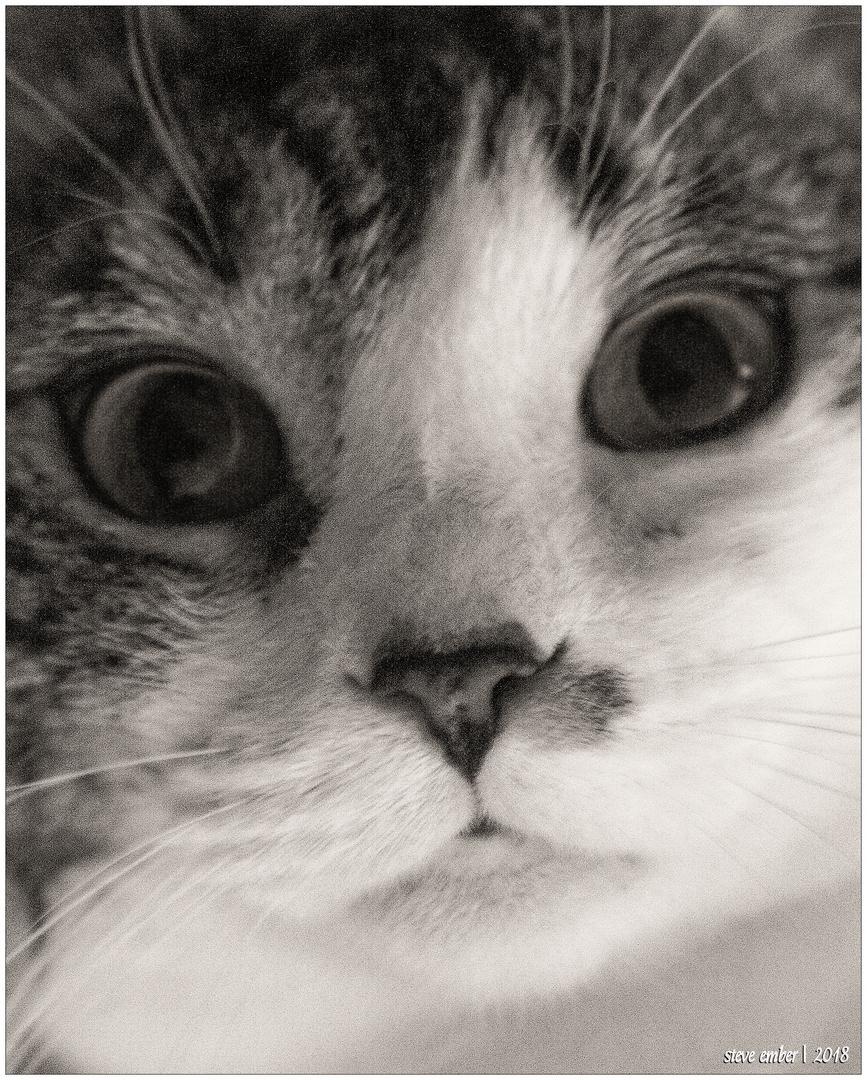 Scamper the Wookie Cat...