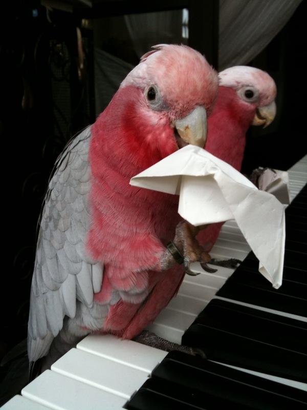 Scarlett und Othello