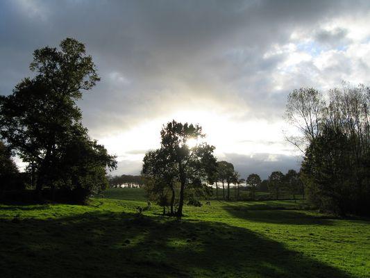 scène champêtre en fin de journée
