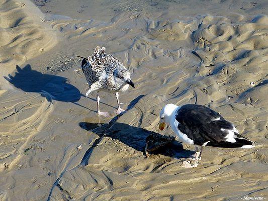 Scène de plage entre goélands