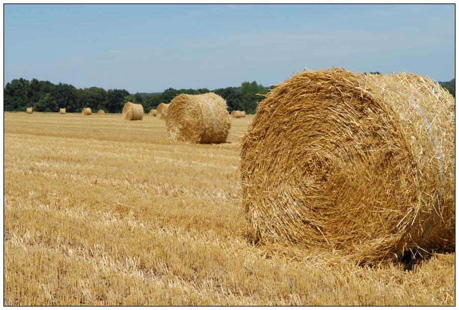 Scène d'été à la campagne