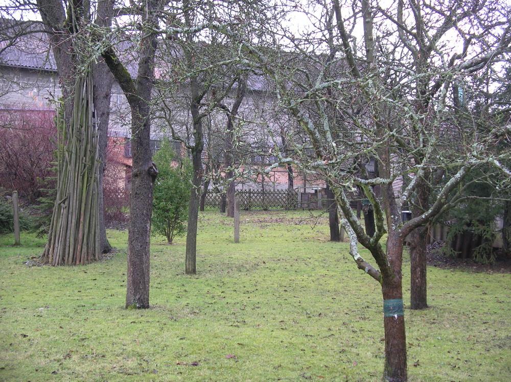 Schade - Wiinter Anfang 2008