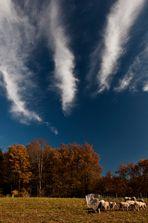 Schäfchenwolken?