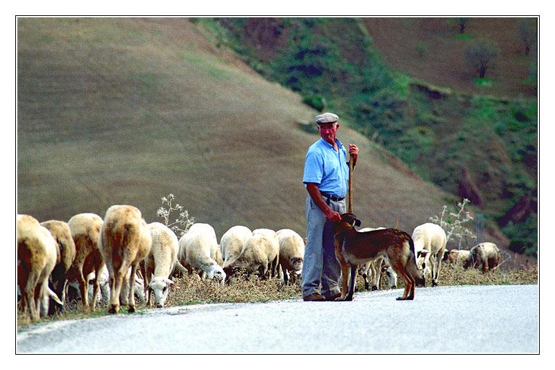 Schäfer, Hund und Schafe