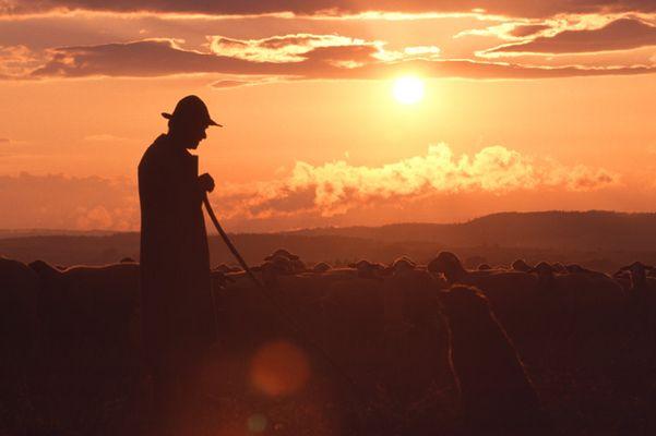 Schäfer mit Hund und Herde bei Sonnenuntergang
