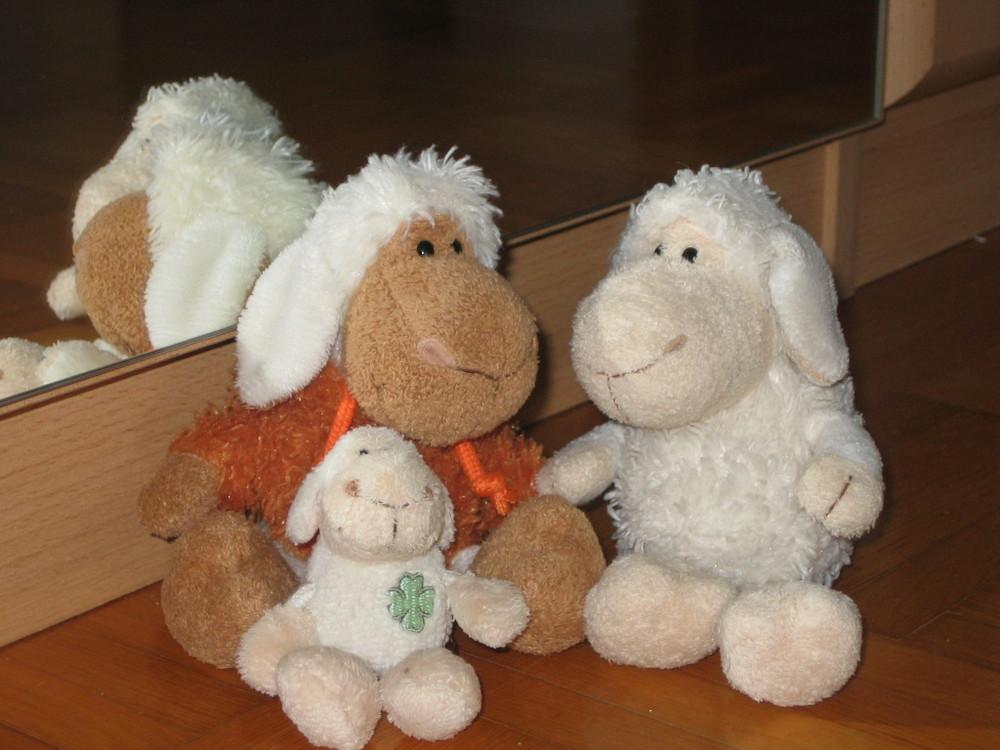 Schaf - Familie
