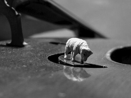 schaf liebt cello III