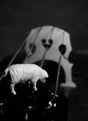 schaf liebt cello IV