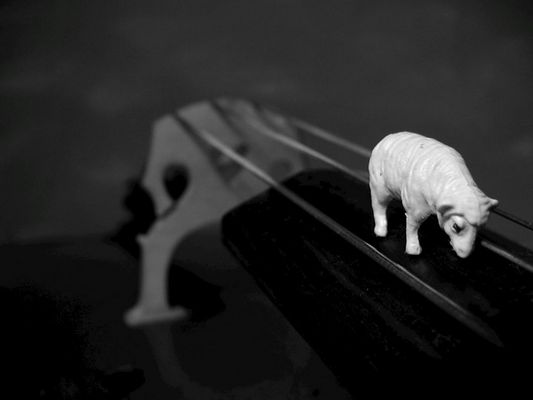 schaf liebt cello VI