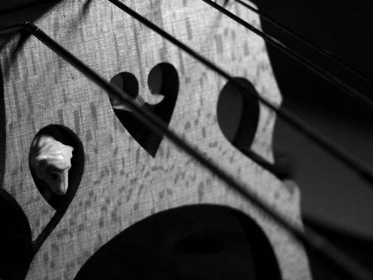 schaf liebt cello XII