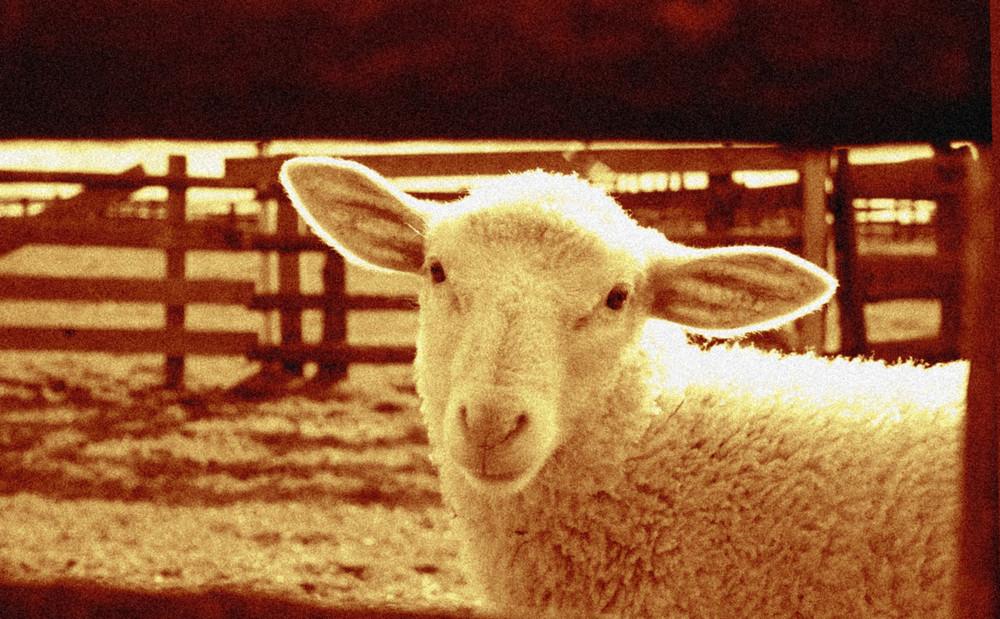 Schaf mal unschaf