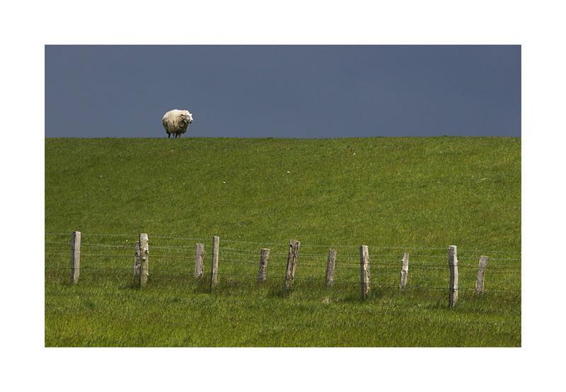 Schaf vor Donnerdrummel