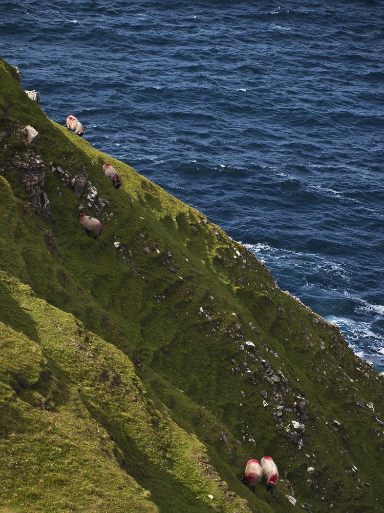 Schafe am Steilhang