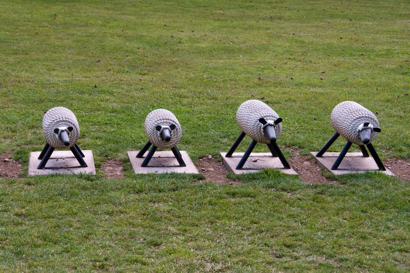 Schafe im Park