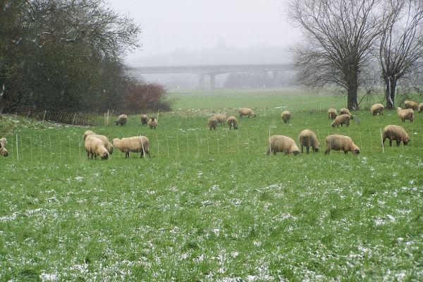 Schafe im Schneetreiben