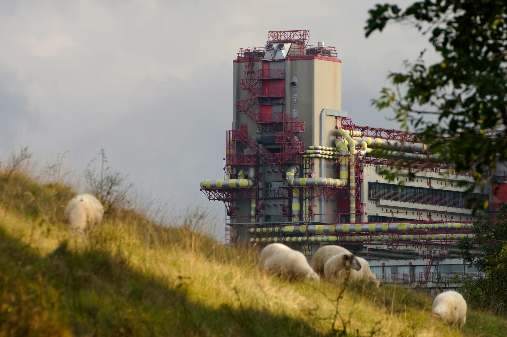 Schafe im Weltall